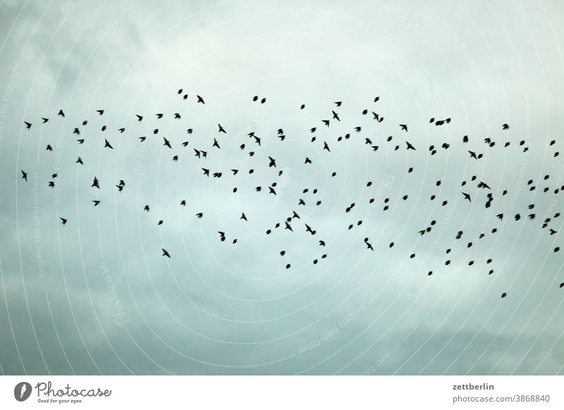 Crows or blackbirds Evening Berlin Movement Trajectory Airport airport building Airfield Building House (Residential Structure) Sky Horizon Deserted Nature