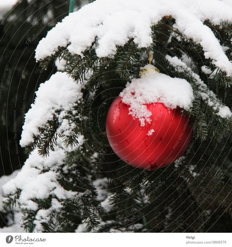 red christmas bauble with snow cap hangs outside on a snow covered fir branch christmas ball Glitter Ball Christmas Fir tree snow-covered Snow Winter winter