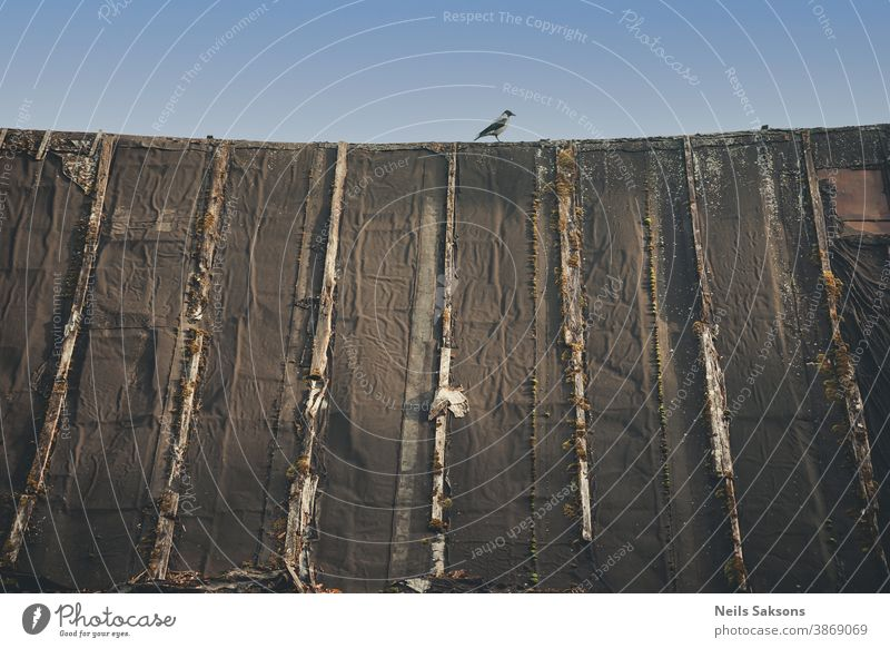 crow on the old vintage barn roof in sunny day Animal avian bird blue blue sky feather feathered house magpie moss nature pattern perch perched ridge sit