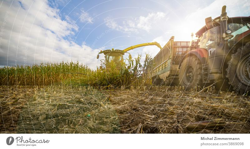 Corn chopper in the corn harvest shredder Forward Colour photo Deserted Exterior shot Nature Maize Corn cob Maize field track gate Plant Field Agricultural crop