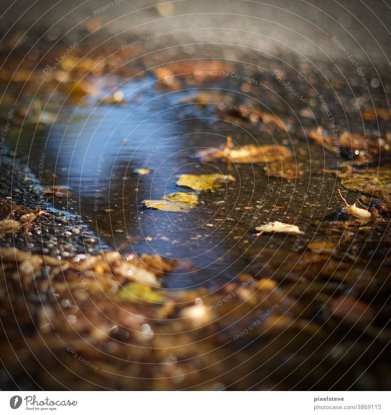 Autumn leaves in a puddle Puddle Autumnal Puddles Leaf Forest Yellow Brown Nature Environment Sense of Autumn puddle mirroring rainy day puddle picture sad
