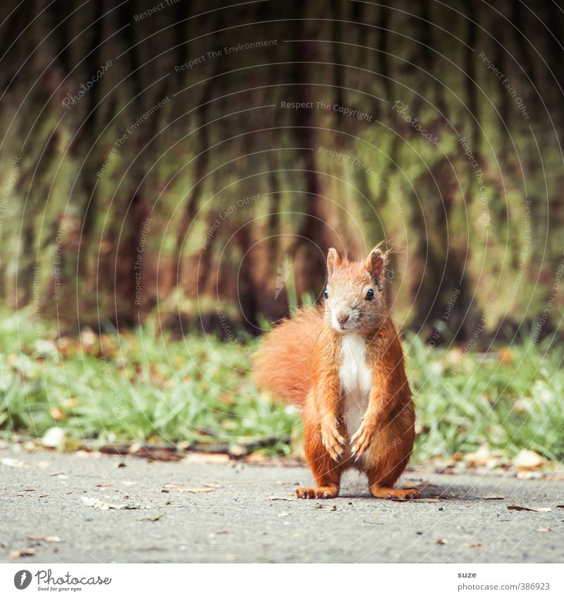 poser Environment Beautiful weather Tree Grass Meadow Animal Wild animal 1 Observe Cool (slang) Small Funny Cute Green Red Squirrel Rodent Tree trunk Pelt