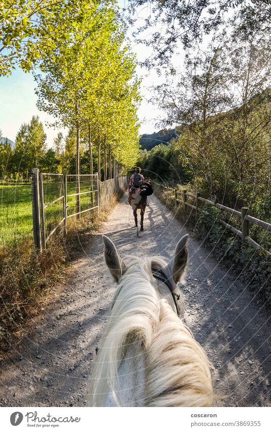 Rider taking a ride with his horse. First view. active adult adventure animal beautiful calm cloud dressage equestrian equine explore forest fpv freedom grass