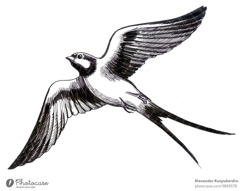 Flying swallow bird. Ink black and white drawing flying animal wings nature art artwork background illustration sketch ink