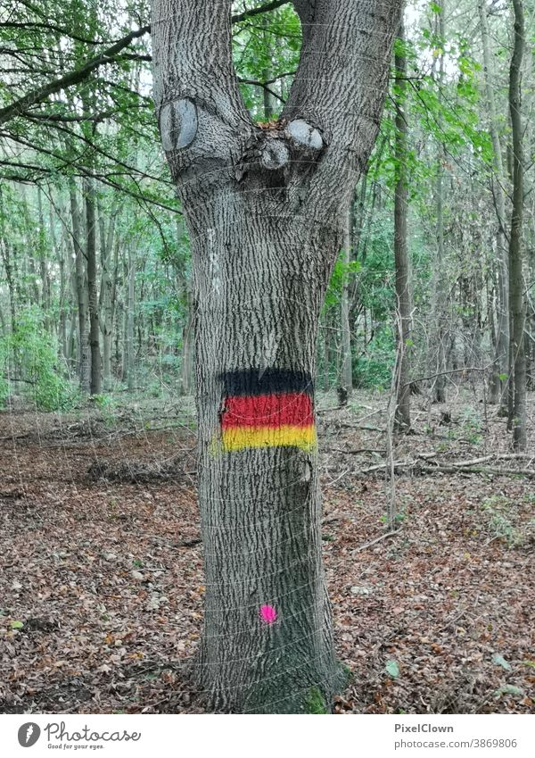 The German national colours in the forest Germany Landscape Tree Forest Autumn Colour photo Nature Environment