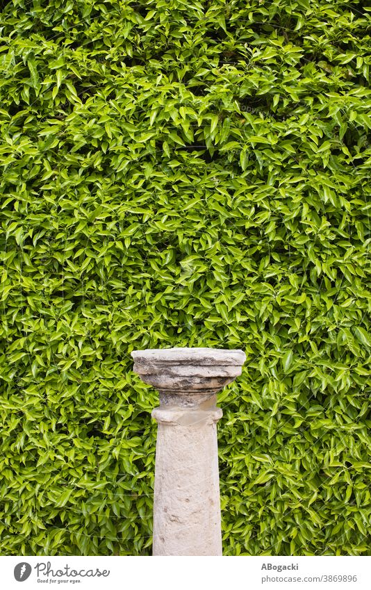 Column Pedestal and Living Wall Background texture background nature plant leaf leaves foliage leafage flora greenery vegetation living wall backdrop design