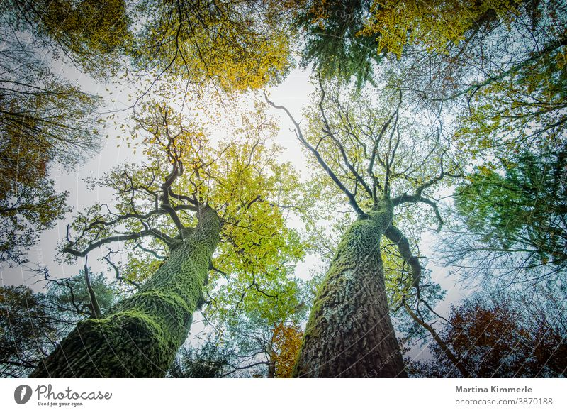 Zirton coloured autumn trees photographed from below. Autumn Branch Landscape country Day Vicinity foliage Forest Leaf leaves Lemon naturally Orange Outdoors