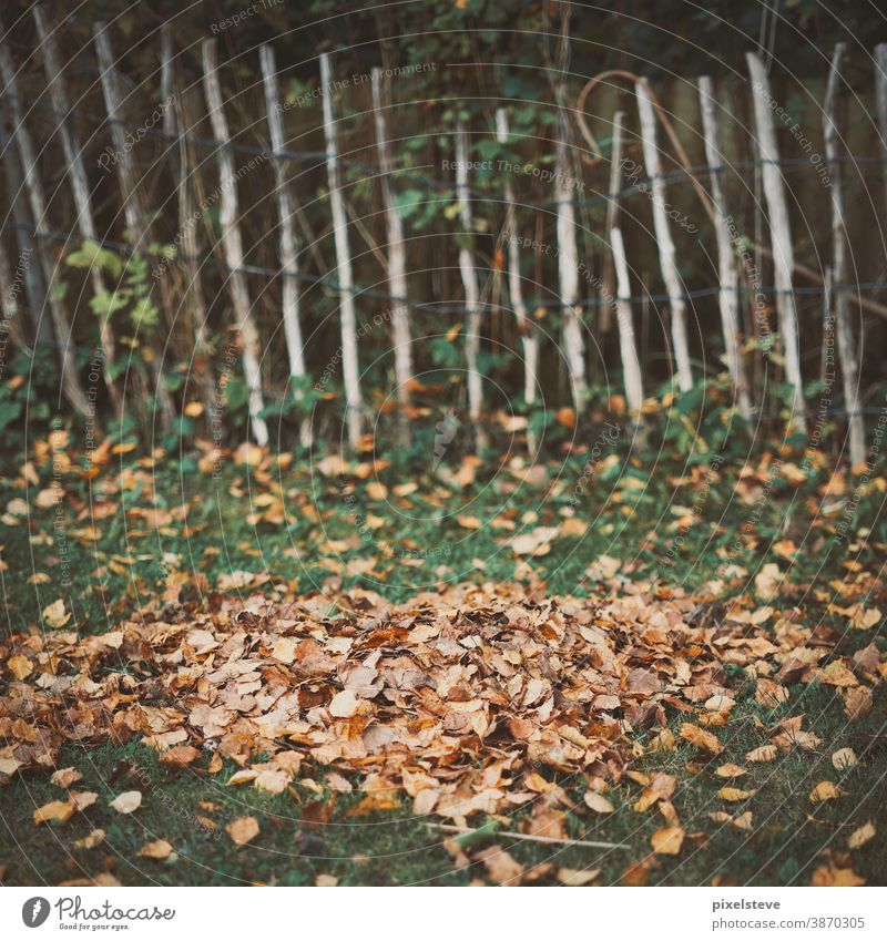 pile of leaves in front of a fence foliage heap of leaves Fence Garden Autumn Autumnal Autumn leaves October Tree Deciduous tree Leaf Deciduous forest
