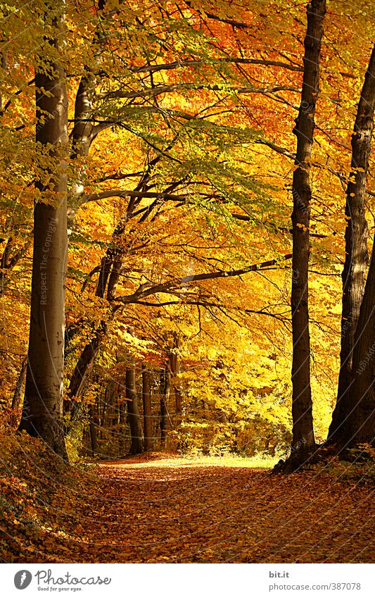 forest path Senses Relaxation Calm Meditation Vacation & Travel Tourism Trip Environment Nature Landscape Plant Autumn Beautiful weather Tree Forest Warmth