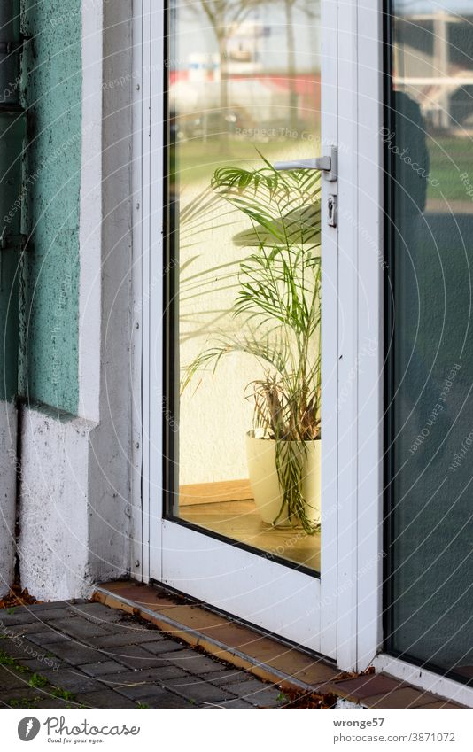 View through a glass door into the interior of an office with a pot plant as room decoration Glass door Front door Office Load review Reflections tub plant