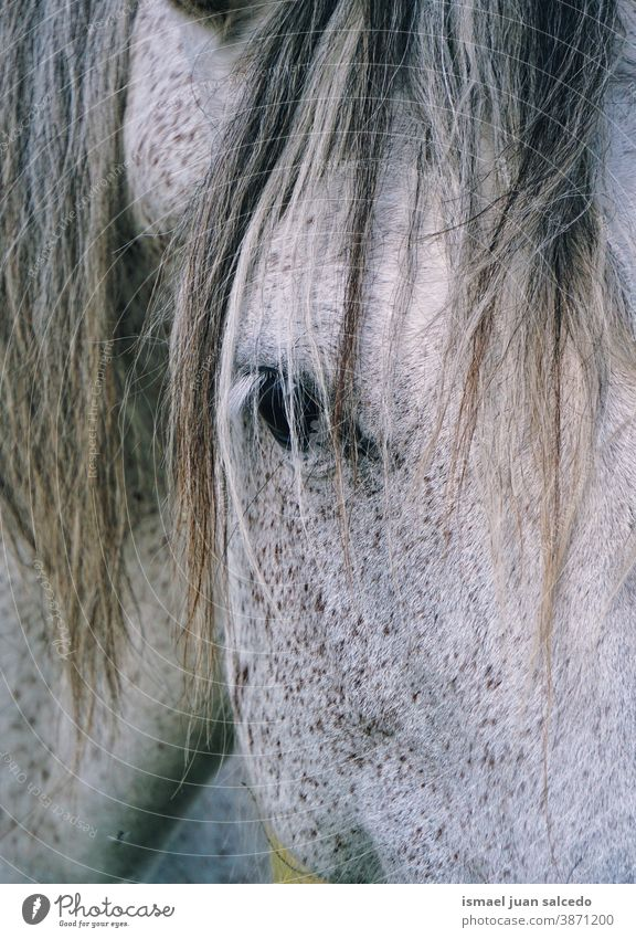 white horse portrait animal wild head eyes ears hair nature cute beauty elegant wild life wildlife rural meadow farm grazing pasture outdoors Exterior shot