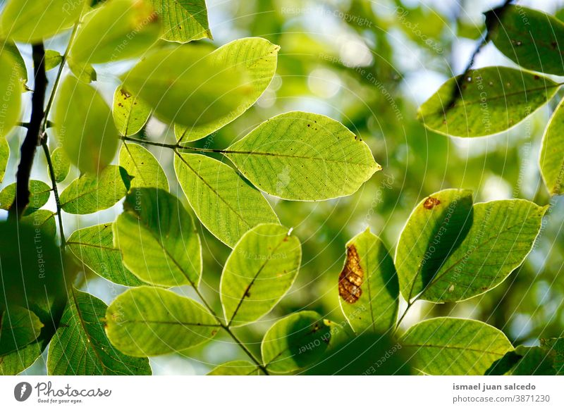 green tree leaves in autumn season, green background branches leaf nature natural foliage textured outdoors beauty fragility freshness autumn mood fall Seasons