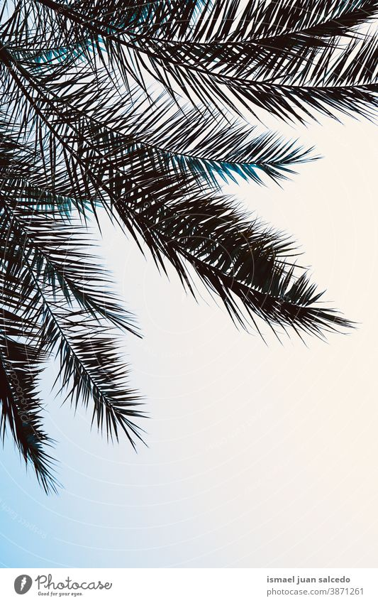 palm tree leaves silhouette in the sky palm tree silhouette leaves space for text Sky blue Blue sky Clear sky Shadow Silhouette Minimalistic nature leaf