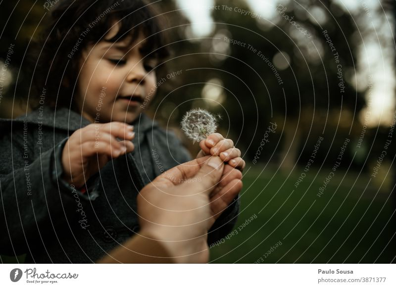 Child holding Dandelion 0-09 years Lifestyle authentic autumn caucasian child color curiosity curly hair daughter day enjoyment environment explore family