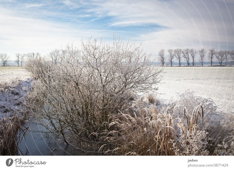 the next winter will surely come (again not). Winter Snow Sun Sky Cold Ice Frost Tree Blue Landscape Field Deserted Beautiful weather Environment Plant