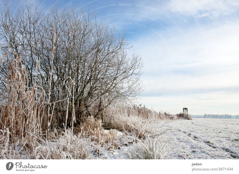 winter to the horizon. Winter Field Snow Cold Nature Tree Deserted Copy Space top White Ice Frost Environment Plant Landscape Horizon Beautiful weather