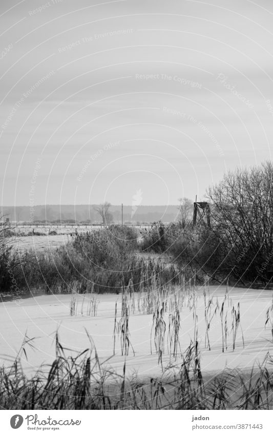 christmas greetings. Snow Ice Winter Cold Frost Frozen Freeze Nature White Water fields Black & white photo bushes Exterior shot Plant Horizon Deserted