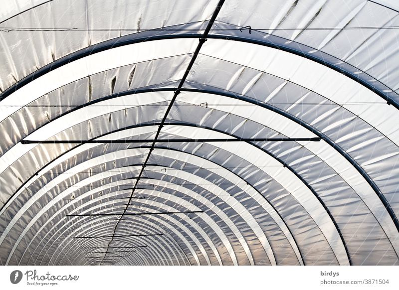 Foil greenhouse with depth effect. Tunnel. Tunnel view foil greenhouse graphically bows Round Tunnel vision Round arch Long geometric Greenhouse plastic
