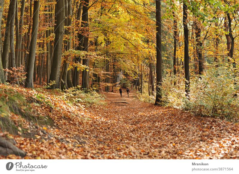 autumn walk Autumn Forest forest path leaves Tree trees forest day Nature Landscape Sun Sunlight foliage naturally Leaf Light Park Green Saxon Switzerland Wood