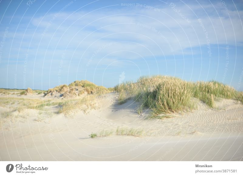 dune dunes Summer Beach Vacation & Travel Nature Sky North Sea coast Landscape Sand Marram grass Exterior shot Relaxation Colour photo Tourism Clouds Ocean Blue