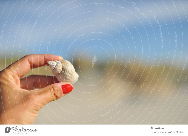 flotsam and jetsam Mussel Beach Sand Water Summer Nature Colour photo coast North Sea Deserted Vacation & Travel Exterior shot Calm Close-up Hand Shell-shaped