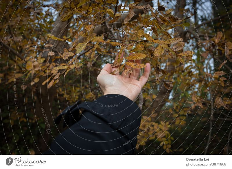 Hand touch foliage in the forest adult autumn care caucasian close-up concept detail dry hand holding human leaf leaves lifestyle natural nature one outdoor
