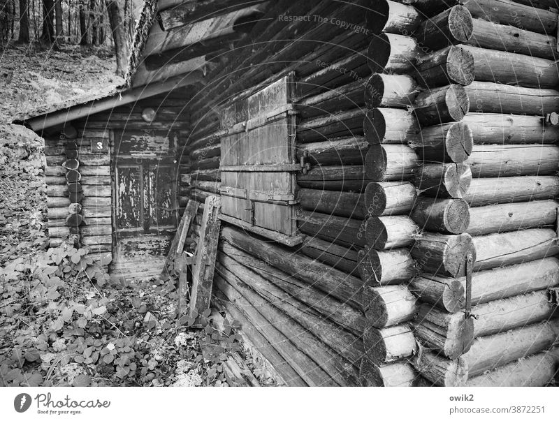 massif Wooden hut Hut Wall (building) Facade Window Firm Black & white photo Exterior shot Close-up Detail Abstract Structures and shapes Deserted Protection
