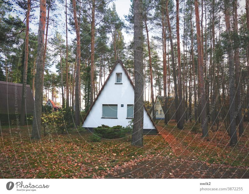 pointed roof Holiday Village bungalows Exterior shot Colour photo Nature Relaxation Landscape Pitch of the roof Simple Tree Forest foliage tree trunks Triangle