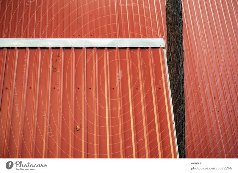 parallel world Roof Tin Red Simple Bright Colours Pitch of the roof Tree interference factor barge in Intrusive Deserted Exterior shot Colour photo Detail