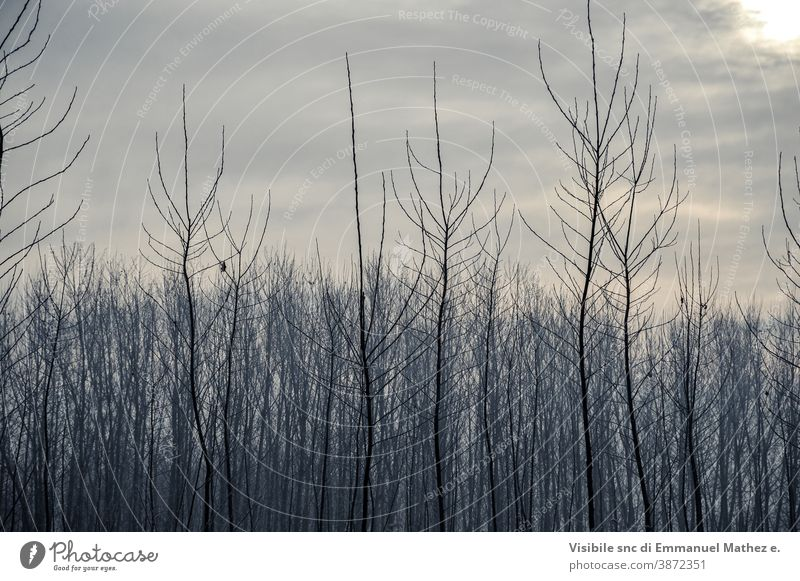 po valley winter field landscape covered with frost flat lomellina italy padana pavia fog tree countryside rural nature farm desert season dark agriculture