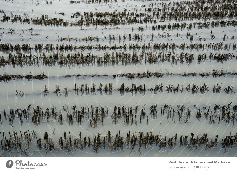 flooded cut wheat fields flooding farmland duck pond farming sowing agricultural bad weather water rural country green grass environment agriculture protection