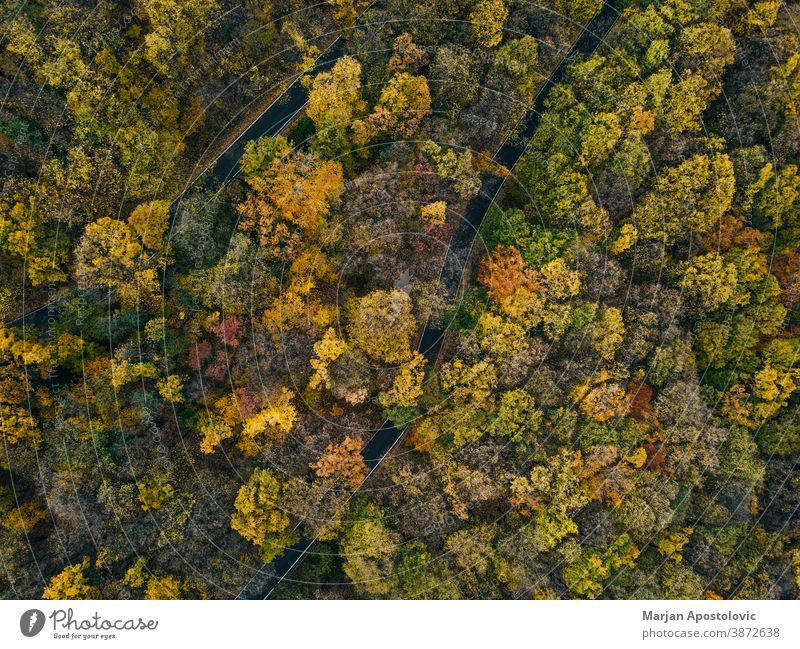 Aerial view of the forest in autumn above adventure aerial air aircraft background beautiful beech colorful colors countryside day drone environment europe