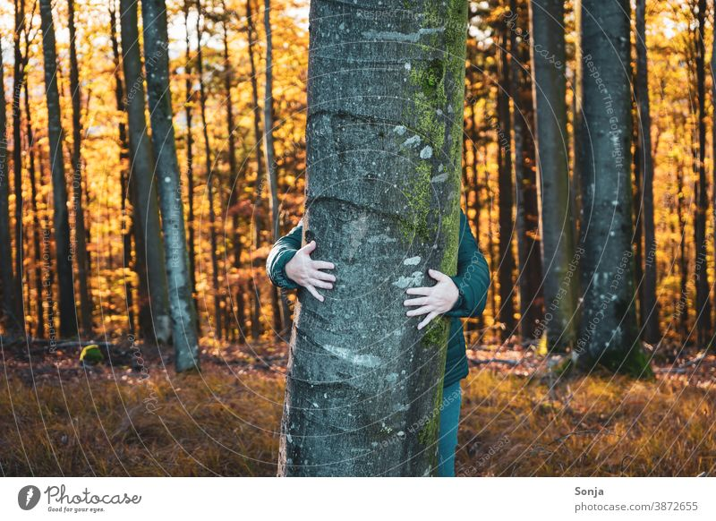 Woman hugs a tree in the forest Tree Embrace Forest Autumn Nature Lifestyle Vacation & Travel Seasons Love To go for a walk explore Joy Relationship Freedom