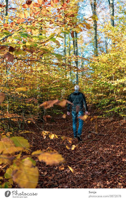 Man walks alone on a forest path. Rear view. above 50 Forest off Hiking on one's own Autumn Autumnal colours Loneliness silent To go for a walk Tree
