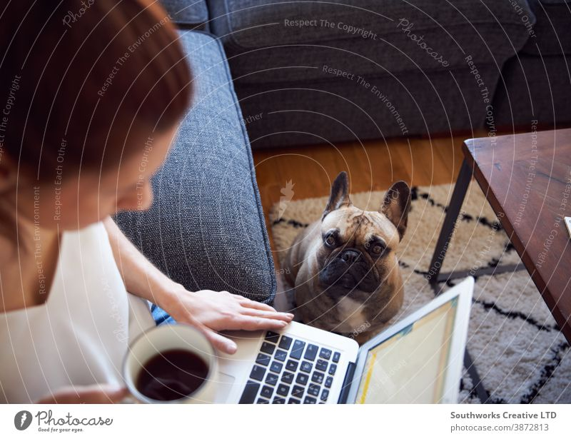 Smiling woman working on laptop sat on sofa drinking coffee dog pet person computer female 20s writing morning young indoors student workspace connected
