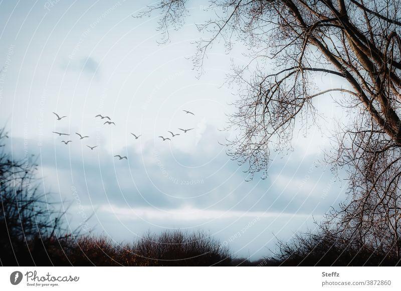 December already... december grey Flock of birds Domestic Nordic Nordic romanticism Poetic Migratory birds December light December vote deciduous trees