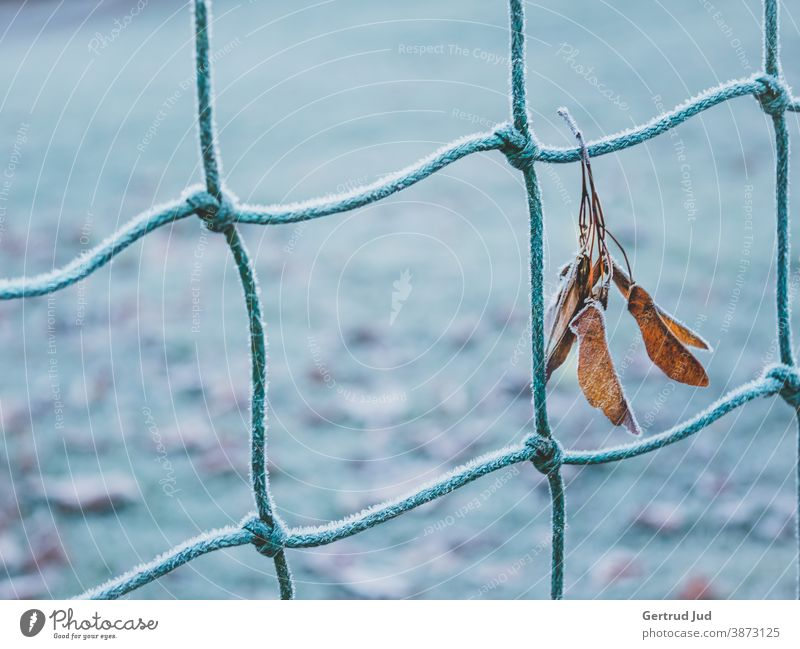 Leaf hanging on a fence with hoarfrost Autumn autumn colours Nature Hoar frost Blue Fence autumn leaves autumn leaf Cold