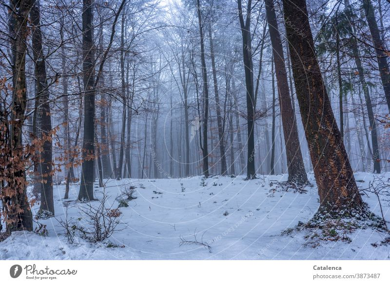 Snow in the forest Nature Tree Forestry trunk Lumber industry Plant Spruce Beech tree Bushes Winter Cold White Gray Brown Wood Fog