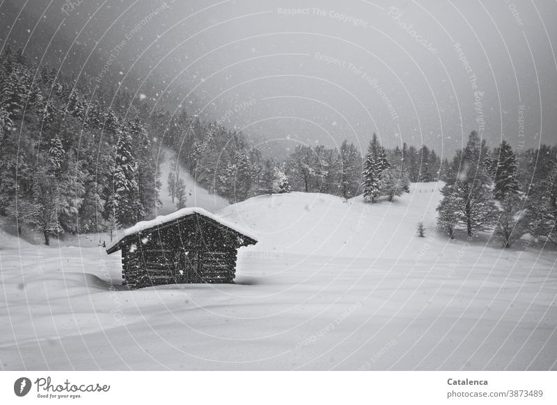Snow falls quietly from the grey sky, covering the haystack in the meadow, the fir trees, the hilly landscape with its cold, protective blanket. Gray White
