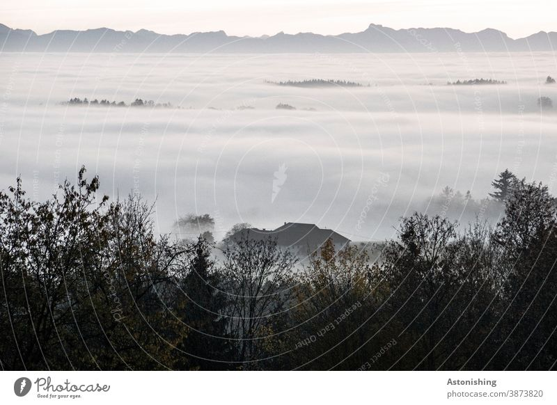 Sea of fog before the mountains Fog Alps Austria Forest Nature Vantage point idyll House (Residential Structure) Farm Roof White Gray Peak Sky wide Horizon