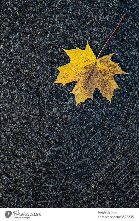 Yellow maple leaf on asphalt Maple leaf Maple tree Leaf Autumn Autumn leaves Autumnal Nature Tree Autumnal colours Plant Environment Asphalt Change Leaflet