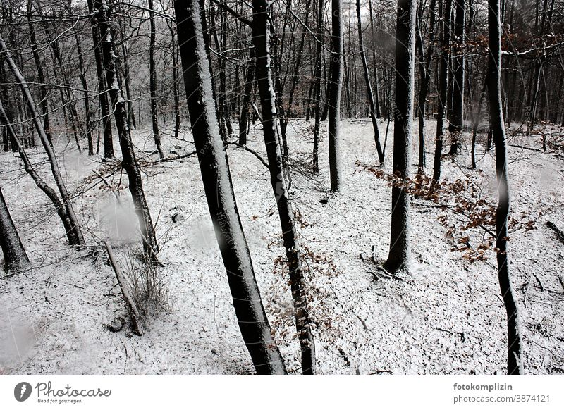 snowy beech forest Winter Snow Winter forest Forstwald Forest winter landscape Nature Environment Exterior shot Landscape Winter's day Winter mood Tree