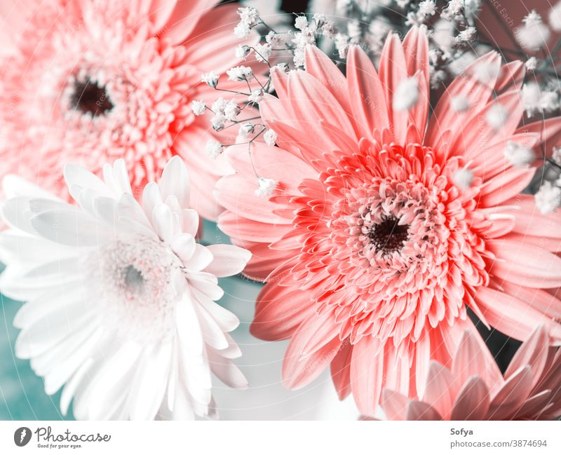 Pink flowers bouquet. Invitation, greeting card floral spring mothers day womens day bunch pink engagement nature color botanical wedding gerbera woman natural