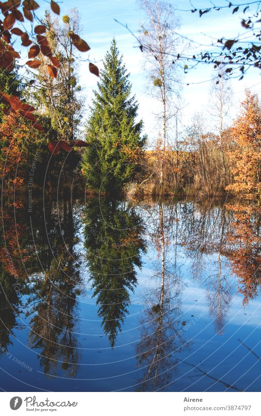 Sundays at the lake Lake Autumn Reflection Tree Autumn leaves Orange Blue Autumnal colours Forest Water reflection water level Sky Nature Calm Beautiful weather