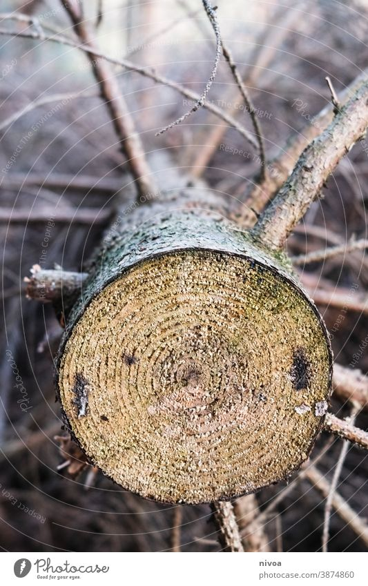 trunk Annual ring Tree trunk Forest Wood Colour photo Nature Brown Exterior shot Deserted Tree bark Structures and shapes Environment Detail Close-up Plant