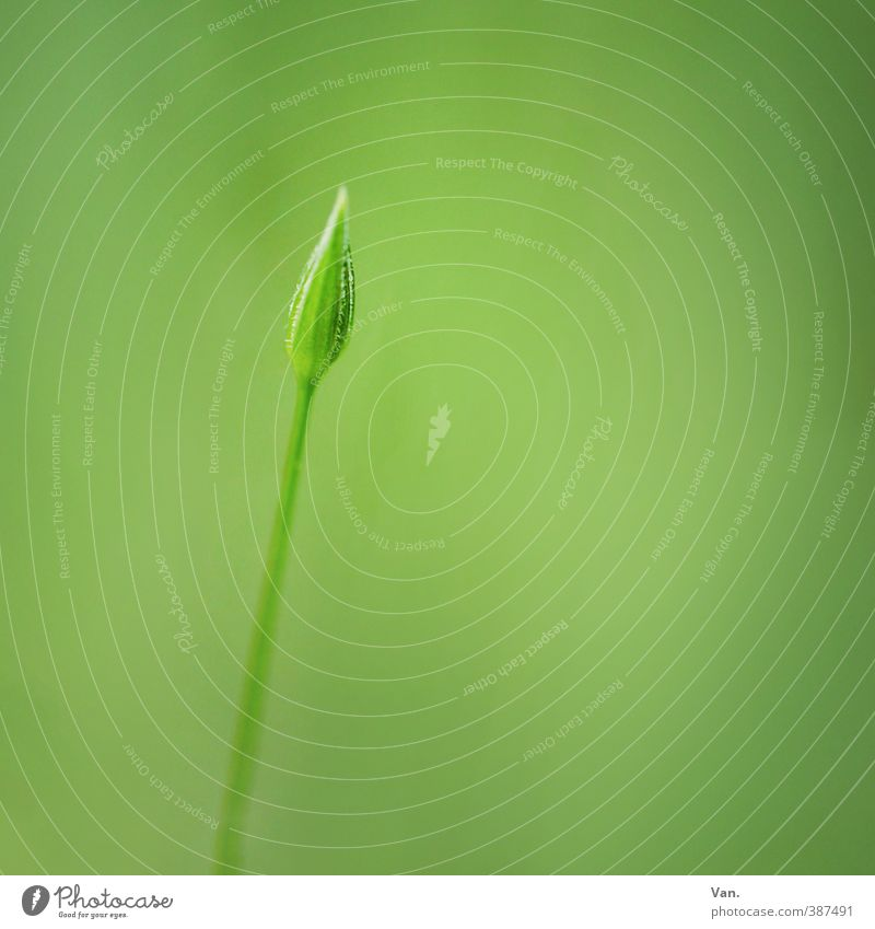 minimum Nature Plant Summer Flower Bud Stalk Garden Small Soft Green Colour photo Subdued colour Exterior shot Close-up Detail Deserted Copy Space right