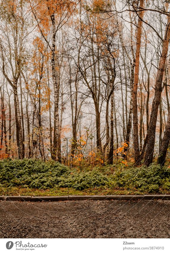 magic forest Forest shrubby trees autumn colours Autumn Concrete colourful densely overgrown variety Landscape Tree Leaf Green Sunlight Outdoors Park naturally