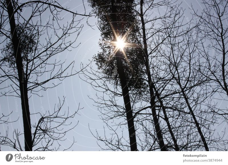 Sunbeam flashes starlike through treetops Treetop Tree tops bare trees Bleak Winter Forstwald Exterior shot Winter mood Winter light Weather Climate cold season