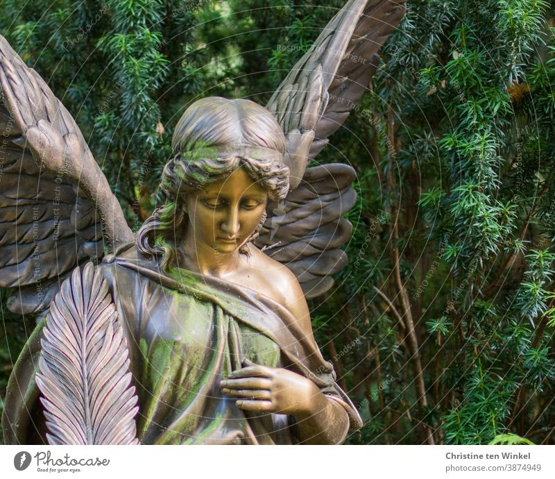 Sad angel on a cemetery in front of the green of a yew tree Angel Statue Cemetery sad silent commemoration Grief Sadness Death Religion and faith Peace