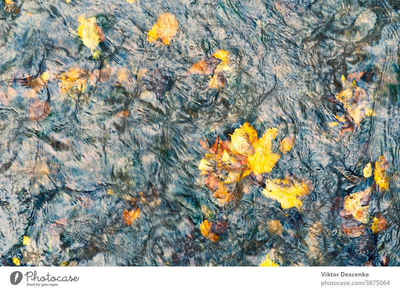 Yellow autumn leaves in water stream background abstract tree pattern vintage texture nature fish leaf colorful yellow forest outdoor orange fall beautiful wet